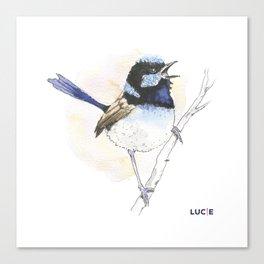Superb-Fairy Wren Canvas Print