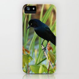 Grackle Hiding In Marsh iPhone Case