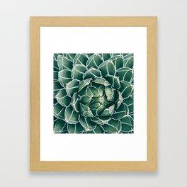 Succulent bloom II Framed Art Print