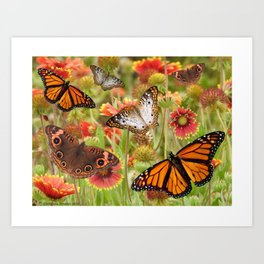 Wild butterfly flowers on sacred protected land Art Print