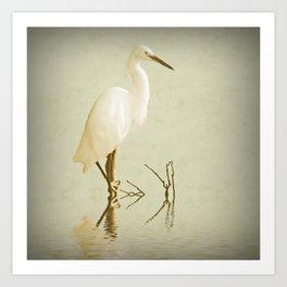 Little Egret 2 Art Print