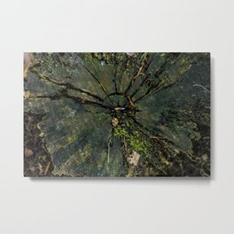 In the middle of the tree Metal Print