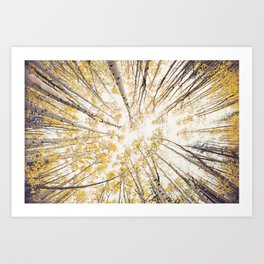 fall looking up Art Print