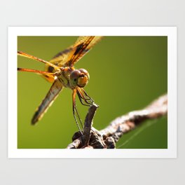 Dragonfly VIII Art Print