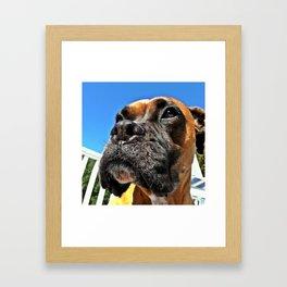 Bailey Rose Framed Art Print