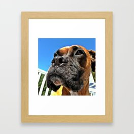 Bailey Rose Framed Art Print