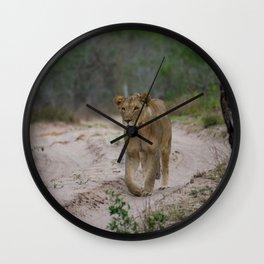 Female Lion at Tembe Elephant Park Wall Clock
