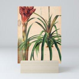 Flower schlumbergera morreniana10 Mini Art Print