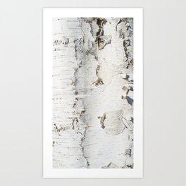 Birch bark pattern Art Print