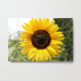 The Sun at Giverny Metal Print