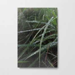 Grass and morning water Metal Print