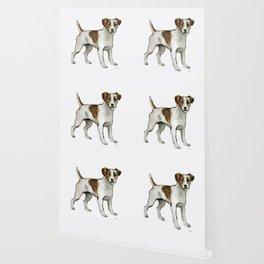 Jack Russell Terrier Wallpaper