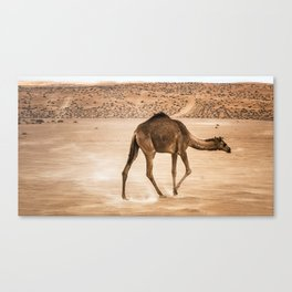 Lone Dromedary Canvas Print
