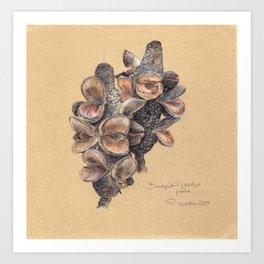 Banksia seed pods Art Print