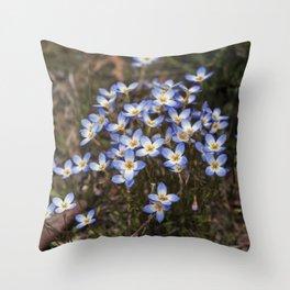 Wild Flowers Bluets Throw Pillow