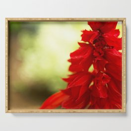 Red Floral Abstract Serving Tray