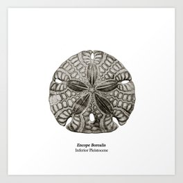 Encope Borealis fossil Art Print