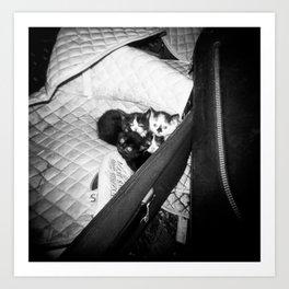Irish Kittens Snuggling Together in the Barn - Holga Film Photograph Art Print