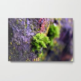 Mossy Sping Metal Print