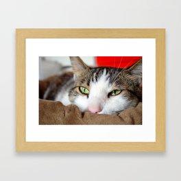 Maiki the cat Framed Art Print