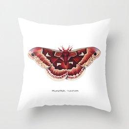 Promethea Silkmoth (Callosamia promethea) Throw Pillow