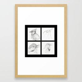 Birds 3 Framed Art Print