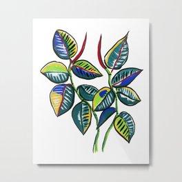 Rubber Tree Plant Metal Print