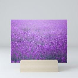 Rain on Lavender Mini Art Print