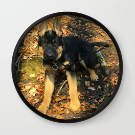A beautiful German Shepherd in the forest Wall Clock