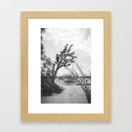 Joshua Tree Sep171 Framed Art Print
