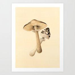 Parasol Mushrooms Art Print