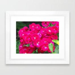 More Flowers!  Framed Art Print