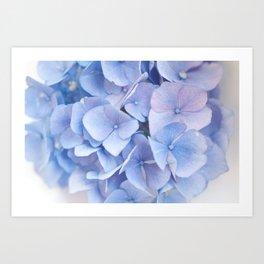 9abecc2bd1f Blue Hydrangeas  3  decor  art  society6 Art Print