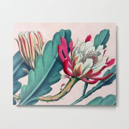 Flowering cactus IV Metal Print
