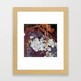 Lichen Rock and Moss Framed Art Print