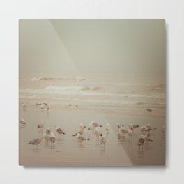 Seabirds Metal Print