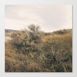 Sagebrush Canvas Print