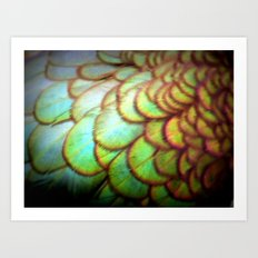 duck feathers Art Print