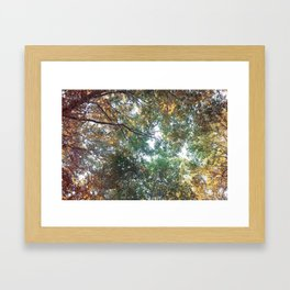 Forest 011 Framed Art Print