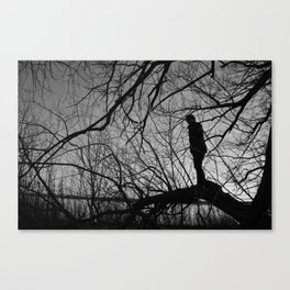 Boy in the Tree Canvas Print