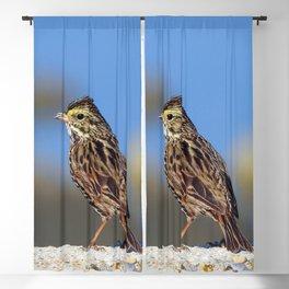 Male Savannah Sparrow Blackout Curtain