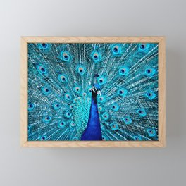 Peacock  Blue 11 Framed Mini Art Print