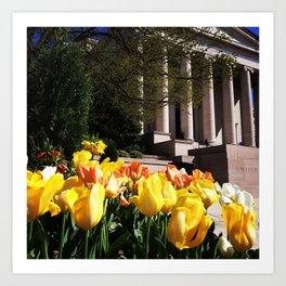 Washington DC Spring Art Print