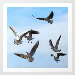 Black Headed Gulls Of The Bosphorus Art  Art Print