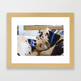 Pair of black and white cows 1 Framed Art Print