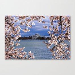 """Jefferson through the Blossoms"" - DC Cherry Blossom Festival Canvas Print"
