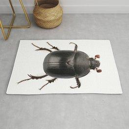 earth-boring dung beetle species Rug