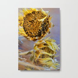 Dried Sunflower 2 Metal Print