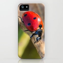 Seven-Spotted Lady Beetle iPhone Case