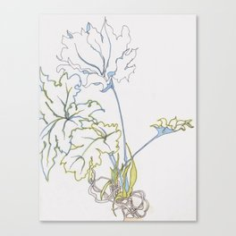 big leaf philodendron Canvas Print